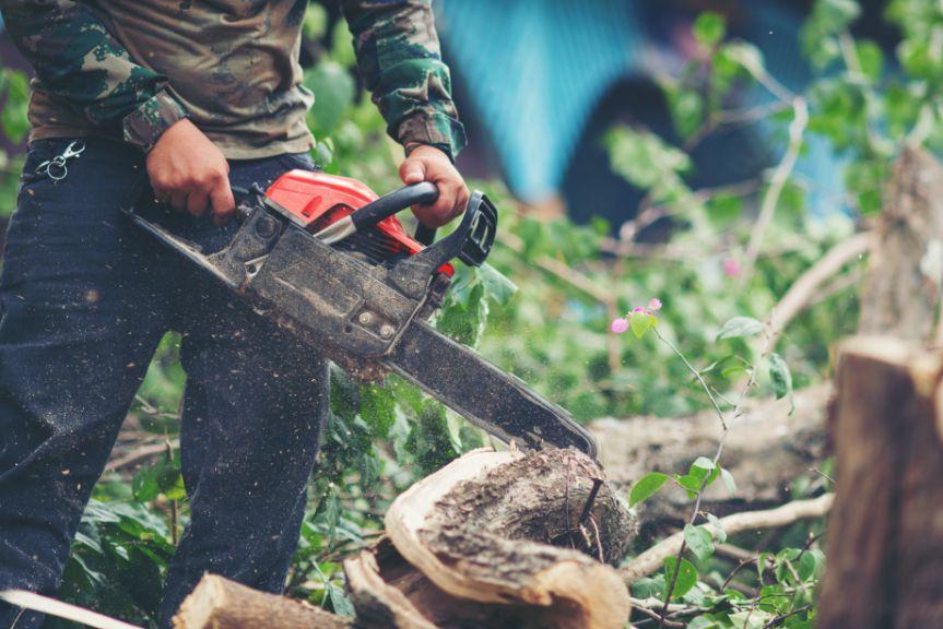 גיזום עצים הגנן הנדיב