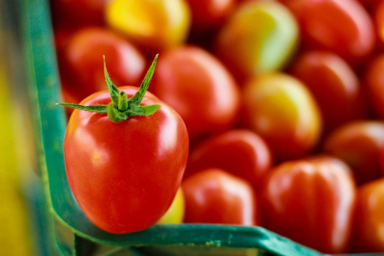 גידול עגבניות שרי
