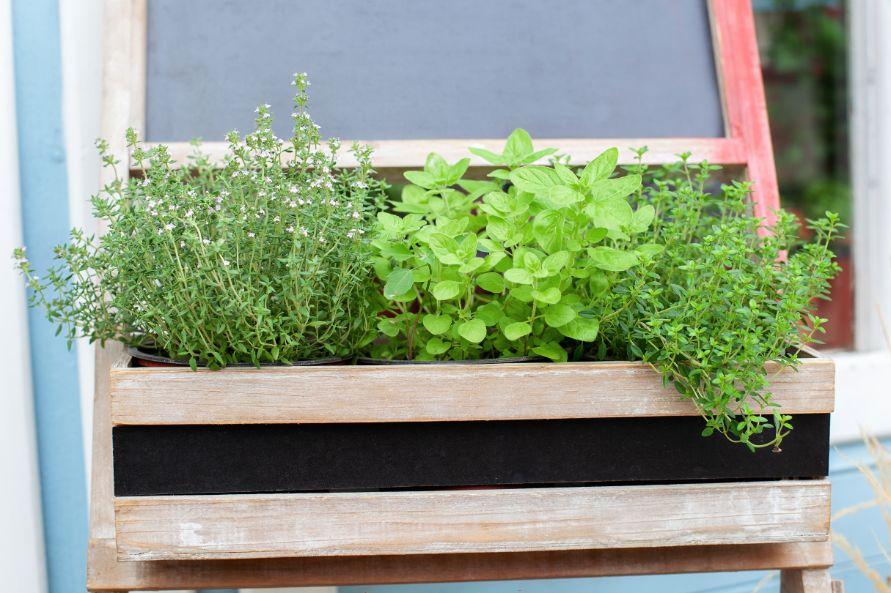 איך לגדל עשבי תיבול בבית