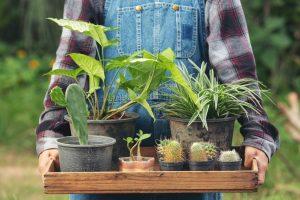 צמחים לגינה ים תיכונית