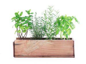 גידול צמחי תבלין בבית