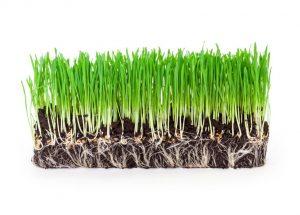 טיפים לשתילת וזריעת דשא בגינה