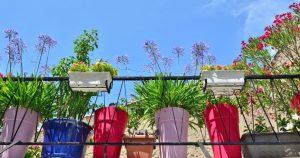 צמחיה וצמחים למרספת שמש