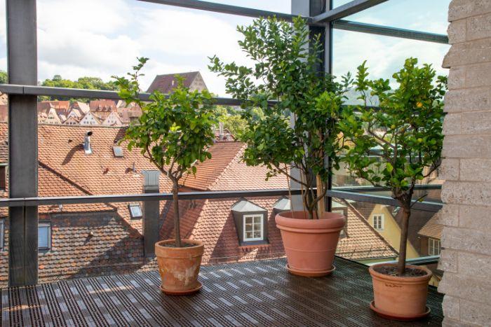 צמחים למרפסת שמש מזרחית