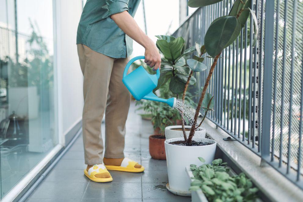 תחזוקת צמחים במרפסת שמש