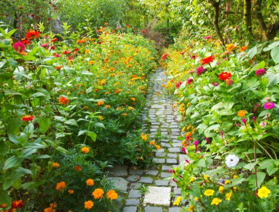 אבני מדרך לגינה